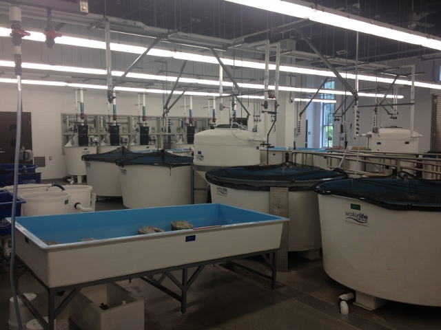 MSMHS Aquaculture Facility