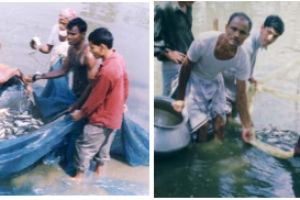 Poverty Alleviation Through Small Scale Aquaculture